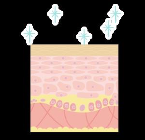 水光注射がお肌に与えるメカニズムを説明する断面イラスト 肌の弾力と潤いが増し、透明感のある肌になった状態